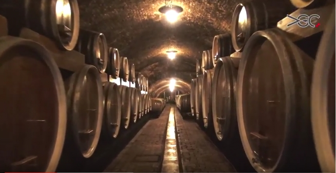 Wine Cellars of Ilok