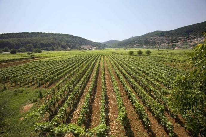 The Indigenous Grapes of Croatia: Pošip